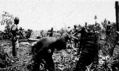 Japanese-prisoners-at-work.jpg