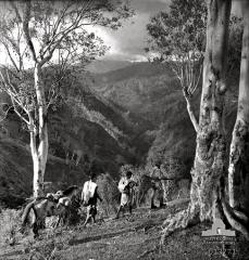 NATIVES-LEAD-A-PACK-TRAIN-OF-TIMOR-PONIES.jpg